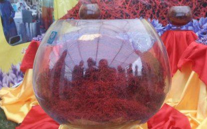 چهارمین جشنواره گل زعفران در هرات برگزار شد