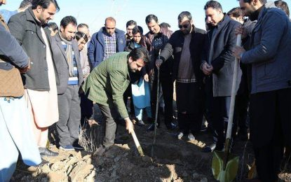 در جریان سال جاری ۲۷۰ هزار نهال در هرات غرس میشود