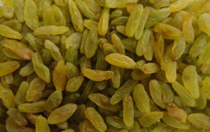محصولات کشمش در کندهار ۱۵ درصد افزایش یافته است