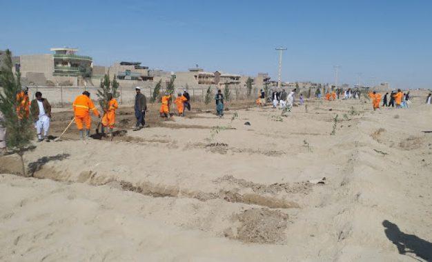 آمادگی مسوولان محلی در نیمروز برای غرس ۵۰ هزار اصله نهال در شهر زرنج