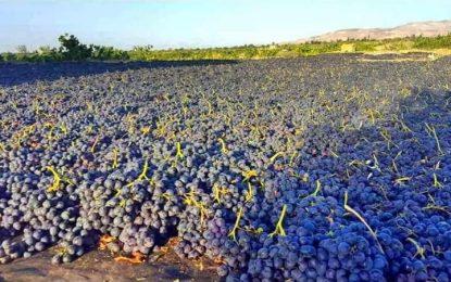 وزارت تجارت: توقع میرود صادرات انگور و کشمش افغانستان به ۱۰۰ میلیون دالر برسد