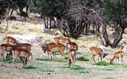 حدود یک میلیون گونه گیاهی و حیوانی در سراسر جهان در خطر نابودی قرار دارد