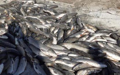 شمار مراکز پرورش ماهی در ولایت کندهار به یک هزار و ششصد مرکز رسیده است